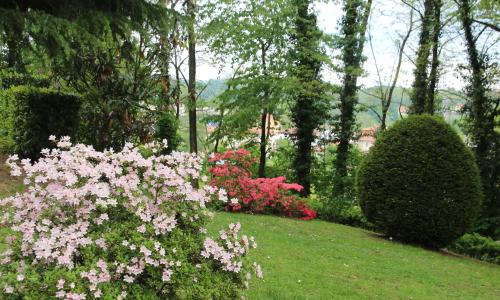 azalee in giardino